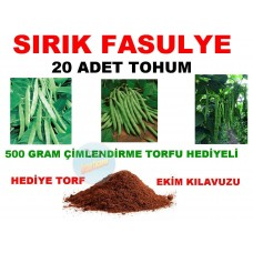 Tohum - Fasulye Sırık Cinsi 20 Adet