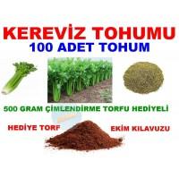 Tohum - Kereviz Tohumu 100 Adet Tohum
