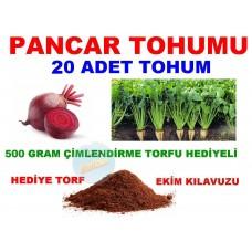 Tohum - Pancar Tohumu 20 Adet Tohum