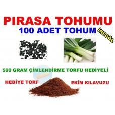 Tohum - PIRASA Tohumu 100 Adet Tohum