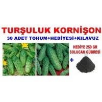 Tohum - Kornişon Tohumu Turşuluk Kornişon 30 Adet