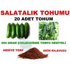 Tohum - Salatalık Tohumu Hıyar Tohumu 20 Adet