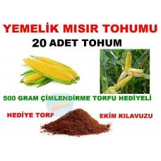 Tohum - Mısır Tohumu Yemelik Süt Cins 20 Adet