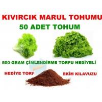 Tohum - Kıvırcık Marul Tohumu 100 Adet