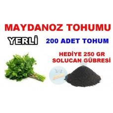 Tohum - Maydanoz Tohumu Yerli 200 Adet