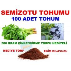 Tohum - Semizotu Tohumu Yerli 100 Adet