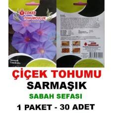 Çiçek Tohumu Sarmaşık Çiçeği Sabah Sefası 1 Paket 30 Adet Tohum