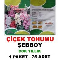 Çiçek Tohumu Şebboy  Çiçeği 1 Paket 75 Adet Tohum
