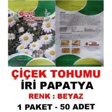 Çiçek Tohumu İri Papatya Çiçeği Tohumu 1 Paket 50 Adet Satış Fiyatı