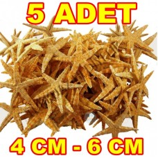 Orta Deniz Yıldızı Naturel 4-6 cm - 5 Adet
